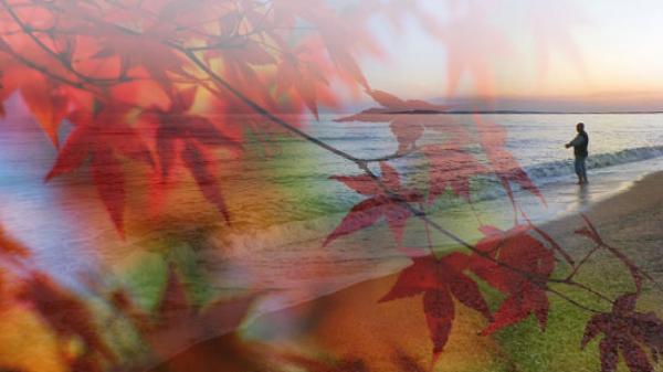"""Чем так привлекателен бархатный сезон в Крыму - Усадьба """"Дом Роз"""" - Частное домовладение Заозерного"""